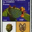 Opuntia rufida 1989