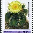 Astrophytum ornatum 1999