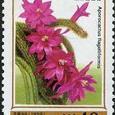 Aporocactus flagelliformis 1999