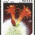 Matucana multicolor 1999