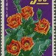 Opuntia erinacea 1964
