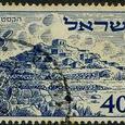 Opuntia 1951