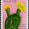 Opuntia ficus indica 1973