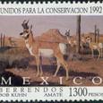 Cactus-Mexico 1992