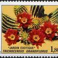 Trichocereus grandiflorus 1982