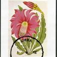 Ephyphyllum splendudum 1972