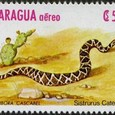 Cactus-Nicaragua 1982