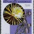 Selenicereus pteranthus 1998