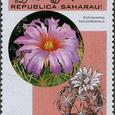 Echinocactus horizonthalonius 1998