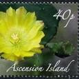 Opuntia vulgaris 2009
