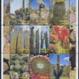 Cactus-Somalia 2002