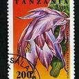 Schlumbergera orssichiana 1995