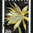 Epiphyllum darrahii 1995