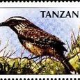 Cactus-Tanzania 1997