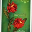 Epiphyllum hybrid 2000