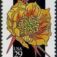 Cactus-USA 1992
