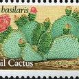 Opuntia basilaris 1981