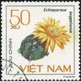 Echinocereus knippelianus 1985