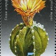 Astrophytum mayas 2009