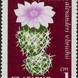 Tephrocactus alexanderi v. .bruchii 1970