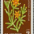 Hatiora clindrica 1970