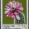 Echinocereus purpureus 1980