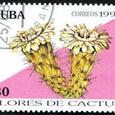 Leptocereus santamarinae 1994
