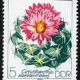 Coryphantha elephantidens 1983