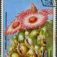 Mammillaria elephantidens 1974