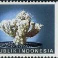 Mammillaria fragilis 1990