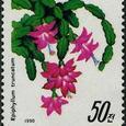Epiphyllum truncatum 1990