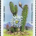 Echinopsis (Trichocereus) sp. 1986