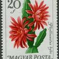 Phyllocactus bybri 1965