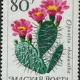 Opuntia rhodantha 1965