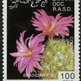 Mammillaria napina 1993