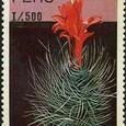 Matucana cereoides 1989
