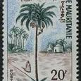Cactus-Mauritania 1967