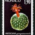 Matucana yanganucensis 1974
