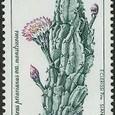 Cereus peruvianus var. monstrosus 1996