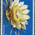Hylocereus 1984