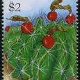 Hamatocactus setispinus 1995
