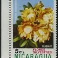 Pereschia  autumnalis 1974