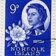 Cactus-Norfolk Island 1960
