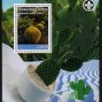 Cactus-Palestine Authrity 2008