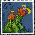 Nopalea cochenillifera 1981