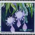 Epiphyllum oxypetalum 1994