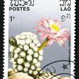 Mammillaria theresae 1986