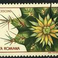 Ferocactus glaucescens 1965