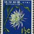 Epiphyllum oxypetalum 1963