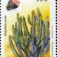 Eulychnia acida 1995